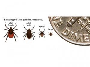 Ticks and dime