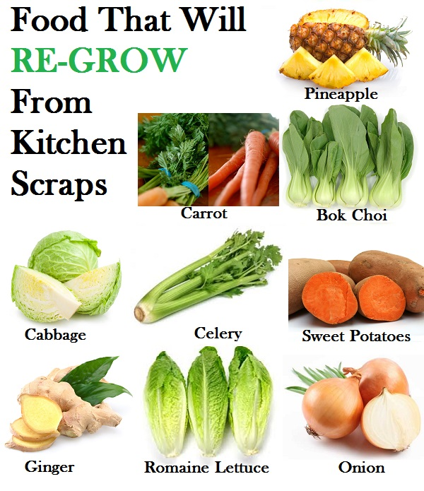 16 Kitchen Scraps That You Can Re Grow: Re-grow Food From Scraps