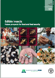 edible-insects-cover